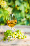 Green grape and one glass of white wine in the vineyard Stock Image
