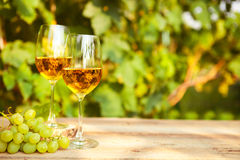 Green grape and two glasses of white wine in the vineyard Royalty Free Stock Photo