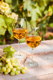 Green grape and two glasses of white wine in the vineyard Stock Photography