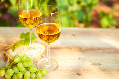 Green grape and two glasses of white wine in the vineyard Royalty Free Stock Photography