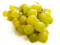 Green grape vine Royalty Free Stock Photo