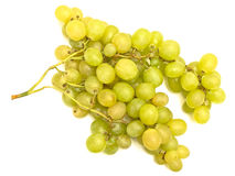 Green grape vine Stock Photos