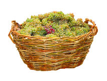 Green grape in wood basket isolated Stock Image