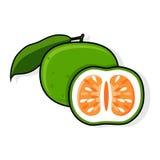 Green Grapefruit. Jaffa Sweetie. Oroblanco Royalty Free Stock Photos