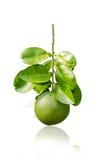 Green grapefruit Royalty Free Stock Photo