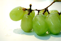Green Grapes. On vine on white background stock images