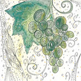 Green grapes. Hand painted green abstract grapes in white decorative background Royalty Free Stock Images