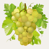 Green grapes Royalty Free Stock Image