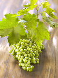 Green grapes Stock Photos