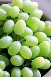 Green Grapes. Are a uniquely nourishing, cleansing and regenerative food. Grapes contain astringent tannins that are beneficial in the fight against cancer Royalty Free Stock Photography