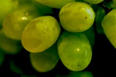 Green Grapes. Close-up of some Green Grapes Stock Photo