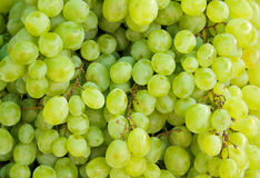 Green grapes background Stock Photography