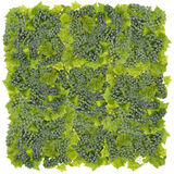 Green  grapes big square Royalty Free Stock Images