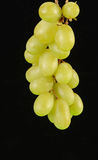Green Grapes on Black Background Stock Photography