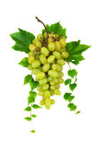 Green grapes branch. Stock Photos