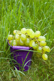 Green Grapes in a bucket on green grass Stock Image