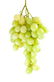 Green grapes bunch (muscat breed). Isolated on the white background Royalty Free Stock Images