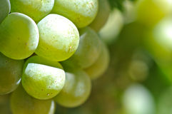 Green Grapes Close Up Royalty Free Stock Photos