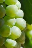 Green Grapes Close Up Macro stock photo