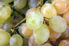 Green grapes at day Royalty Free Stock Image