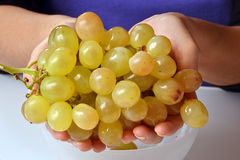The green grapes. Stock Images