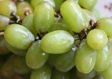 Green Grapes. Fresh Green Grapes on Plate royalty free stock photography