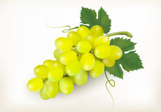 Green grapes fruit isolated on white background. Stock Photo