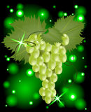 Green grapes. Grapes on a glowing background Stock Image