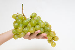 Green grapes in hand Stock Images