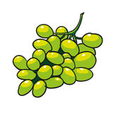 Green grapes hand drawn fruits isolated  Stock Image