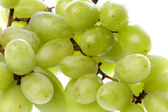 Green Grapes Isolated Stock Image