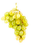 Green grapes isolated on white Stock Photography