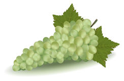 Green grapes with leaves. Royalty Free Stock Image