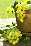 Green grapes and leaves Royalty Free Stock Photography