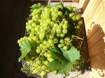 Green grapes with leaves on a beautiful dish Stock Photography