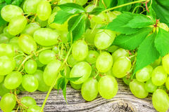 Green grapes with leaves Stock Photography