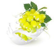 Green grapes in a milk splash on a transparent background. Royalty Free Stock Photos
