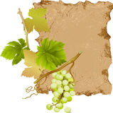 Green Grapes on the Old Scroll Background Stock Photos