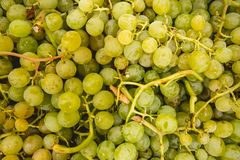 Green grapes from the Valencian orchard stock photos