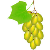 Green grapes on a white background. Royalty Free Stock Images