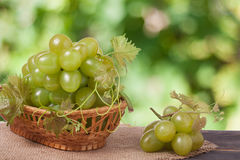Green grapes in a wicker basket on wooden table with blurred background. Green grapes in a wicker basket on a wooden table with a blurred background stock images
