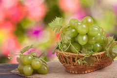 Green grapes in a wicker basket on wooden table with blurred background. Green grapes in a wicker basket on a wooden table with a blurred background royalty free stock images