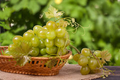 Green grapes in a wicker basket on wooden table with blurred background. Green grapes in a wicker basket on a wooden table with a blurred background stock photos