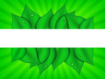 Green Graphic with Copy Space Stock Photography