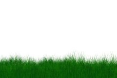 Green gras Royalty Free Stock Photo
