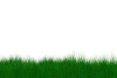 Green gras Royalty Free Stock Photo