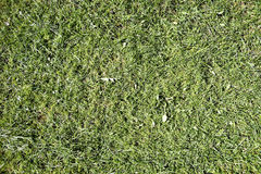 Green gras Royalty Free Stock Image