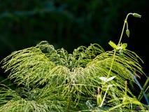 Green gras in the sun. Green gras in a sun in botanic garden royalty free stock photo
