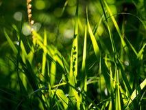 Green gras in the sun. Green gras in a sun in botanic garden Royalty Free Stock Image