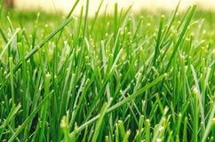 - green grass Zdjęcie Stock